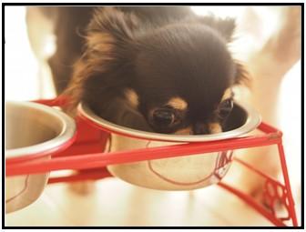 愛犬とご飯の画像